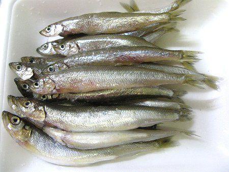 読み方 公魚