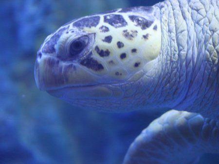 アオウミガメの画像 p1_14