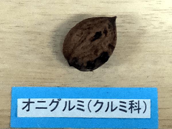 オニグルミの画像 p1_12
