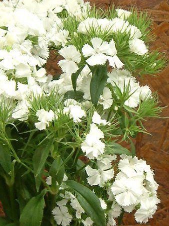 白い花と果実と葉の図鑑