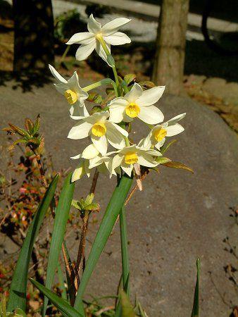 flower2_00030large.jpg